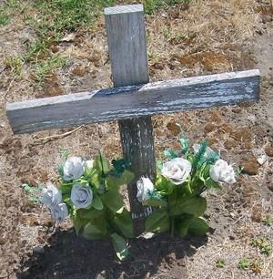 Picture of Taruheru cemetery, block 21, plot 345.