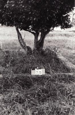 Historic picture of Makaraka cemetery, block MKA, plot 75.