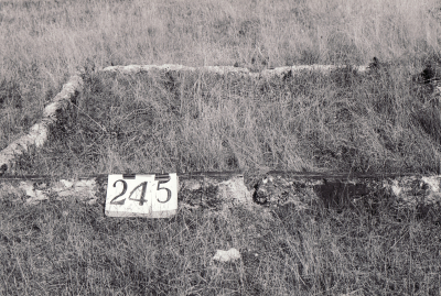 Historic picture of Makaraka cemetery, block MKH, plot 245.