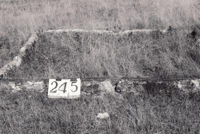 Historic picture of Makaraka cemetery, block MKH, plot 245.