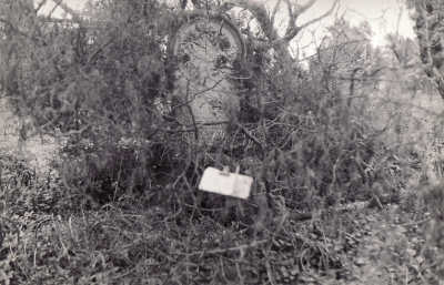 Historic picture of Makaraka cemetery, block MKOLD, plot 83.